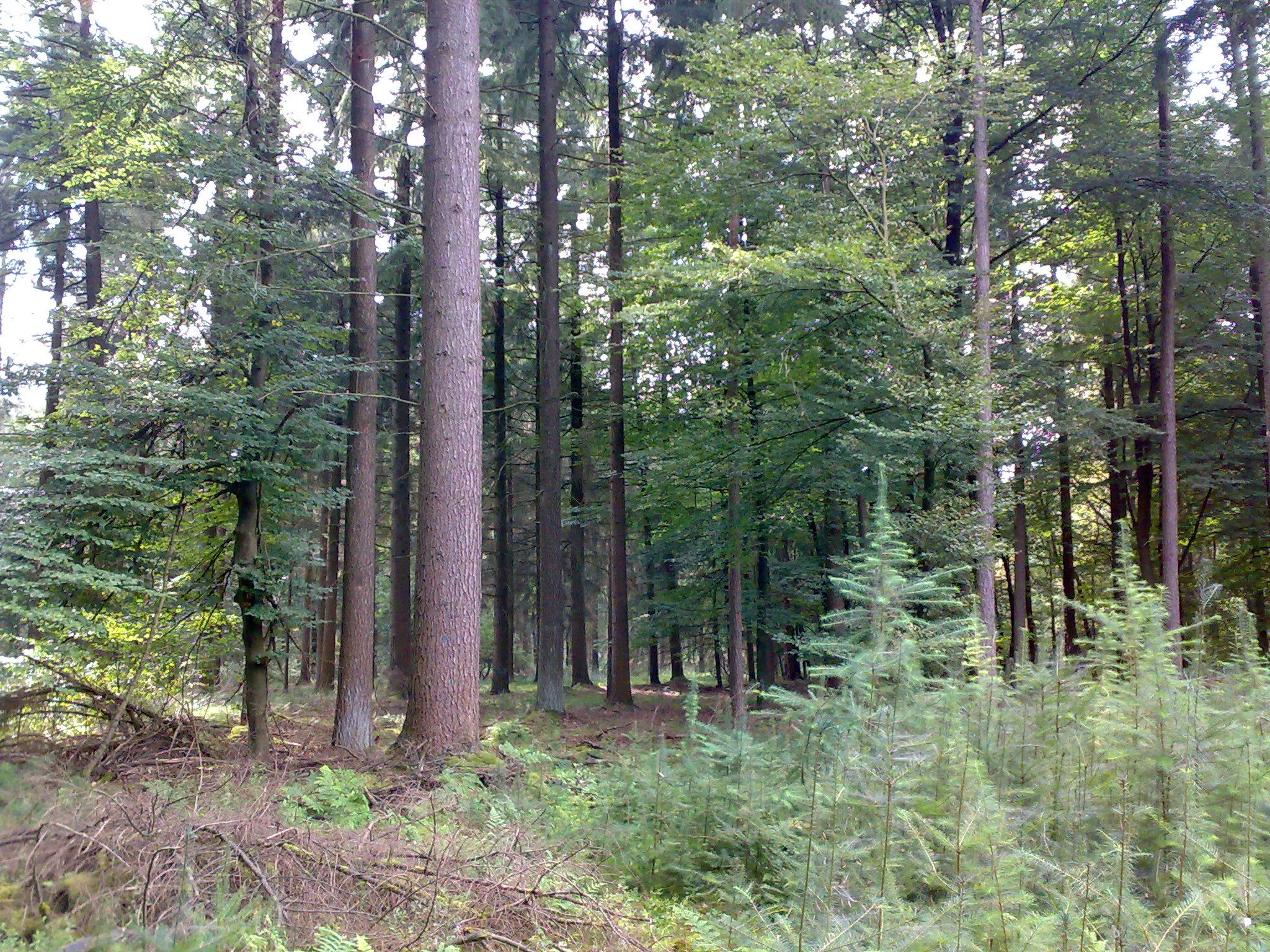 Bij Pro Silva wordt er gestreefd naar gemengde bossen met veel structuurvariatie. Daarnaast wordt er gebruikgemaakt van kleinschalige ingrepen en natuurlijke verjonging.