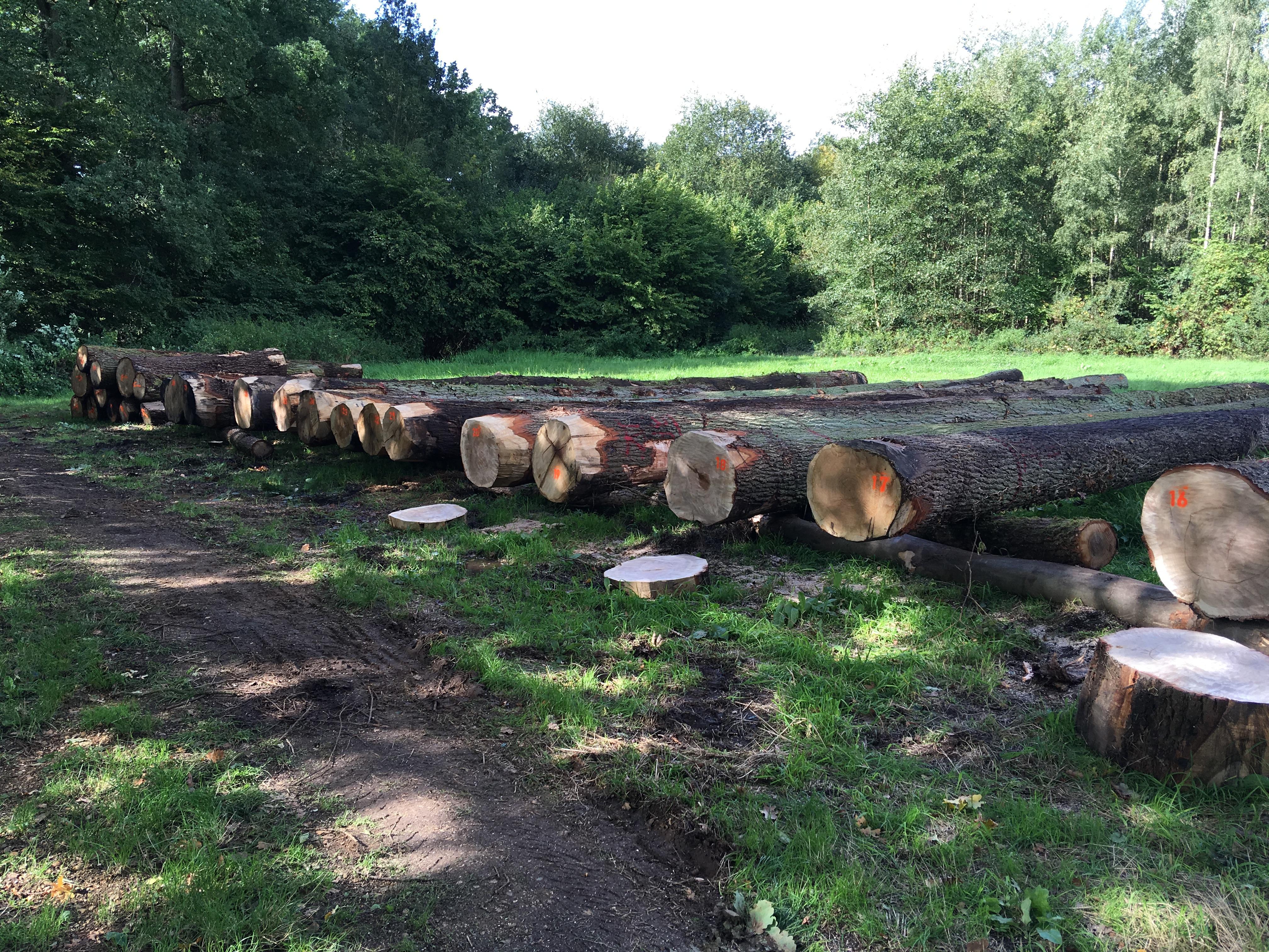 verkoop liggend hout
