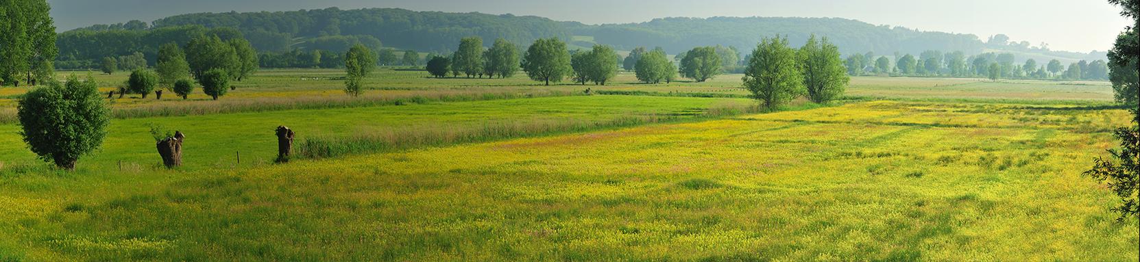 Graslandbeheer