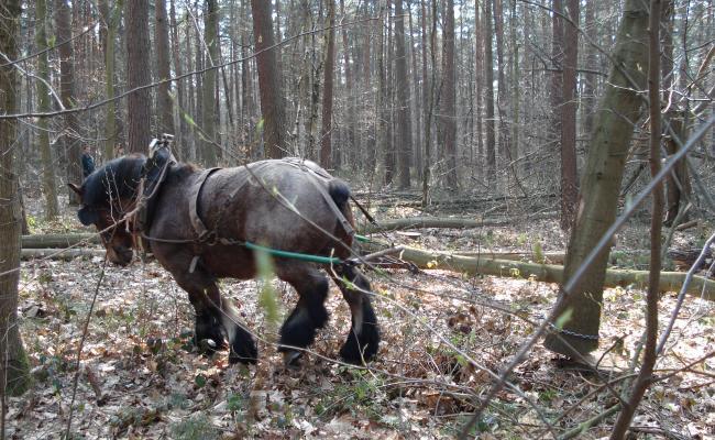 Hanger lostrekken met een paard