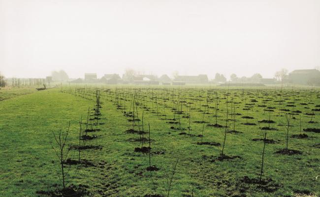 vlaktegewijze aanplant met golvende plantrijen