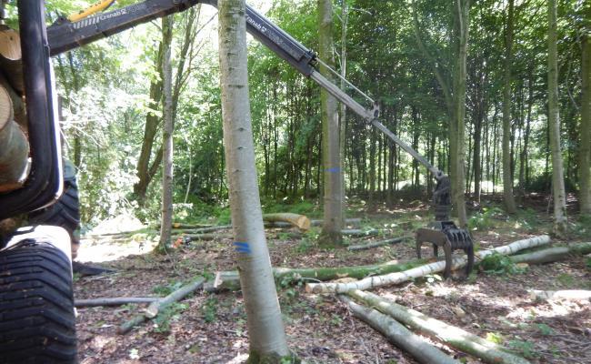 Dunningshout rond toekomstboom laden met de kraan van de uitrijcombinatie