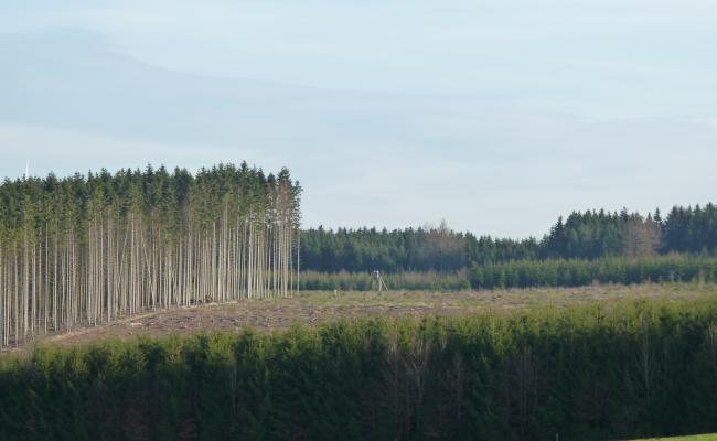 Leeftijdsklassenbos van fijnspar in de Ardennen. Duidelijk zichtbaar is de afwisseling van opstanden van verschillende leeftijden.