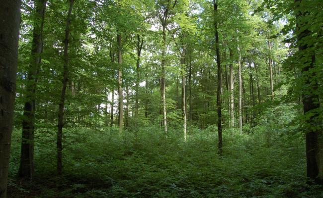 Ongelijkvormig hooghoutbeheer levert bos met verschillende etages