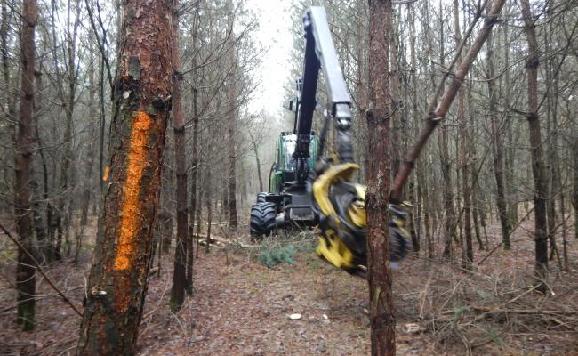 Harvester op ruimingspiste in jong dennenbos