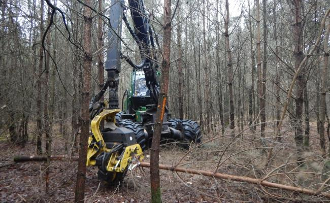 Harvester zaagt gemarkeerde bomen op vaste ruimingspiste