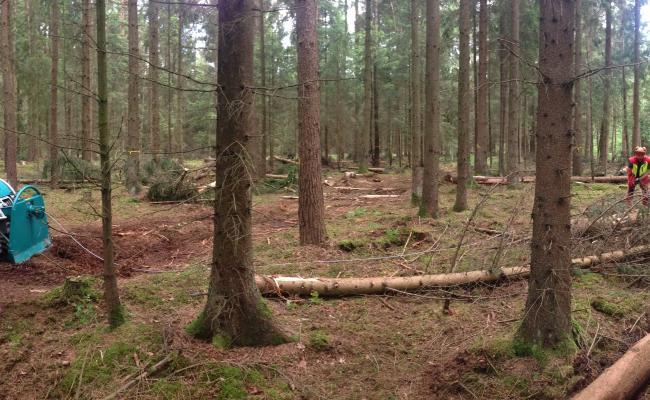 Hele bomen bijtrekken naar de vaste ruimingspiste