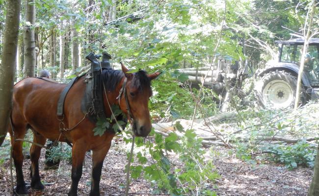 Gecombineerde inzet van paard en machine in de bosexploitatie