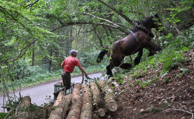 Samenwerking tussen paard en machine op een talud