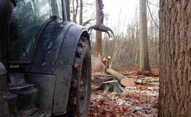 Stamhout voorconcentreren met bosbouwkraan