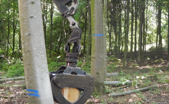 Verfmarkeringen bij bosexploitatie geven belangrijke informatie weer aan uitvoerders