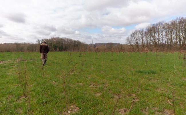 Boswachter in veld met nieuwe aanplanting