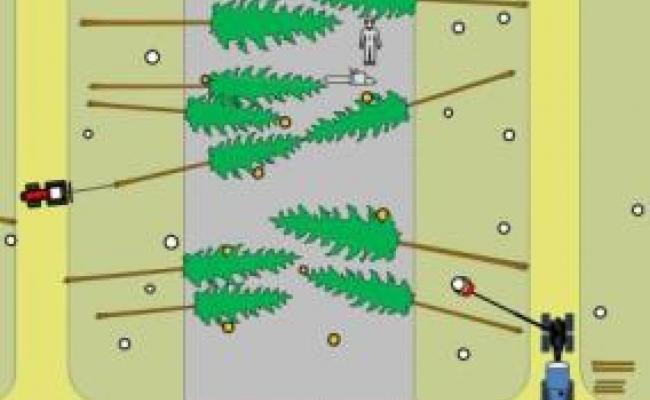 Gemechaniseerde exploitatie bij grotere afstand tussen ruimingspistes: hele bomen voorconcentreren met een lier