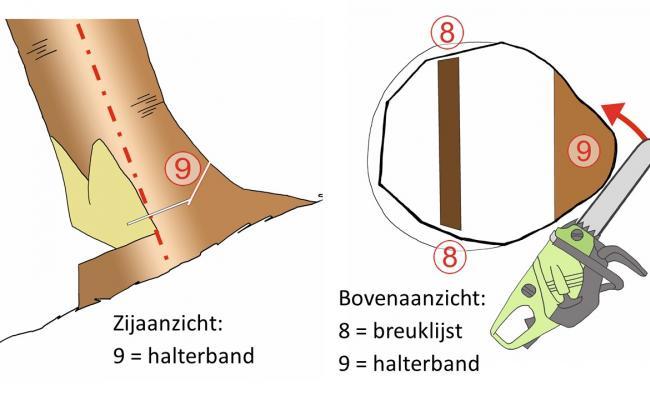Schematisch overzicht halterband van voorhanger doorzagen