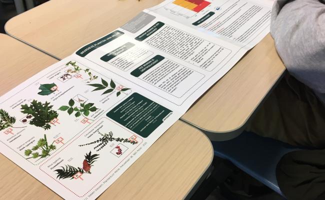 Infografic Invasieve plantaardige exoten - TrIas